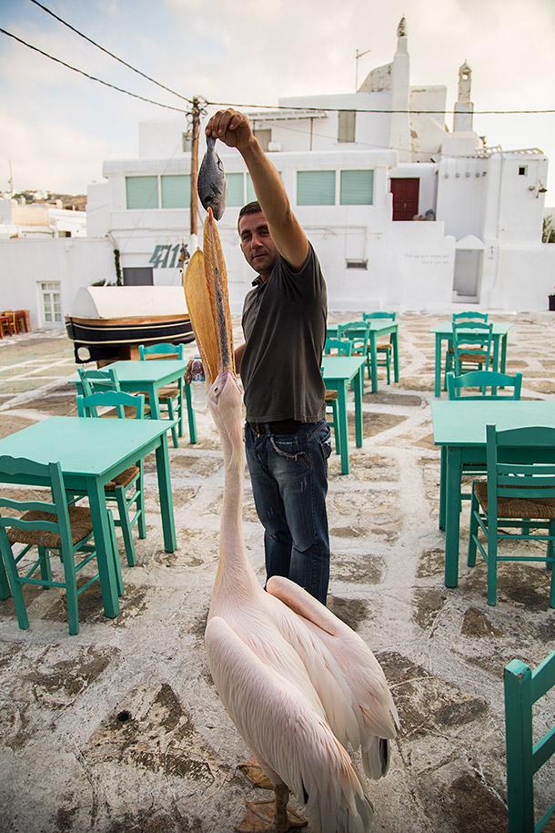 Restaurant-feeding-pelican.jpg
