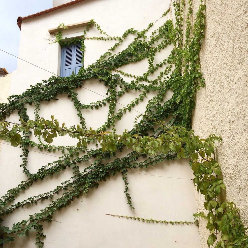 Chania greenery.jpg