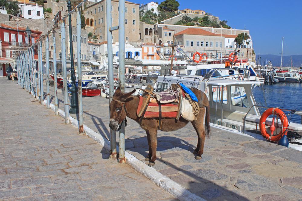 Hydra donkey port.jpg