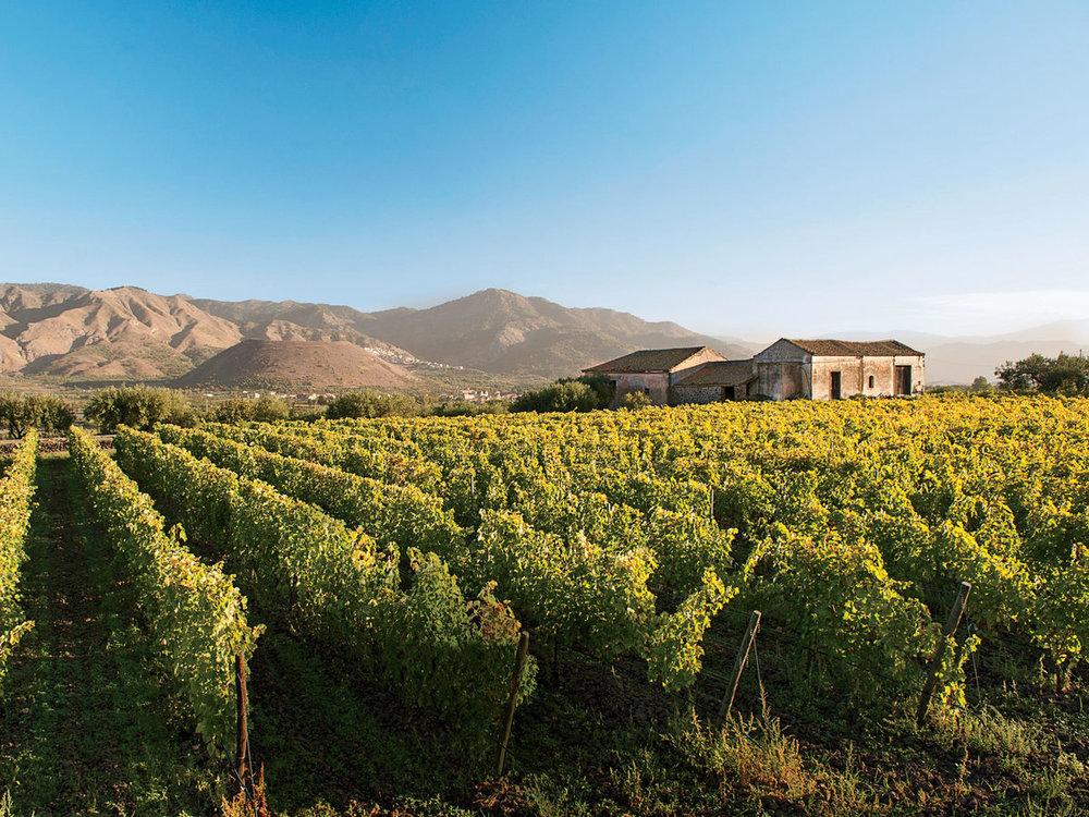 cottanera-vineyards-sicily-wine-tour-FT-MAG0218.jpg