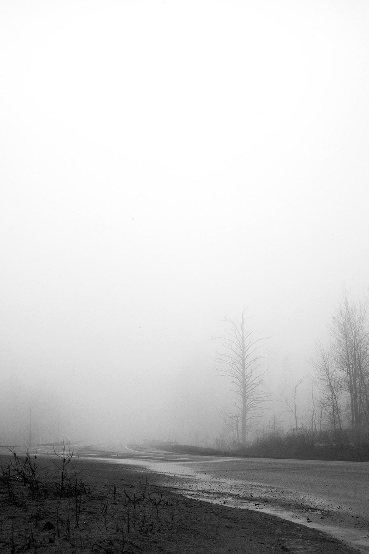 trees_fog.jpg