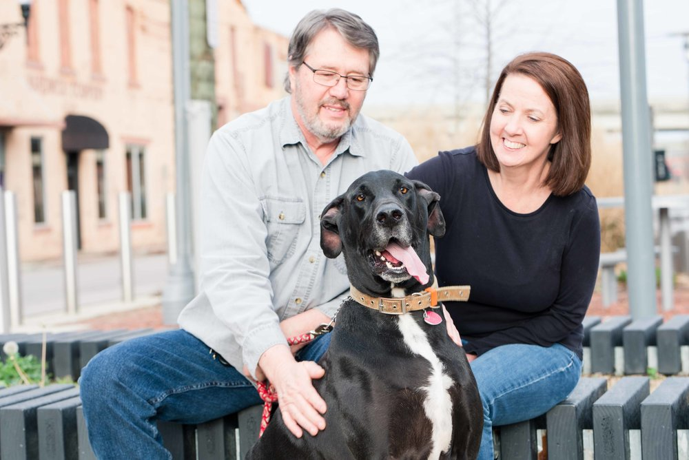 Great Danes of Birmingham | Deborah Michelle Photography Birmingham Alabama Photographer