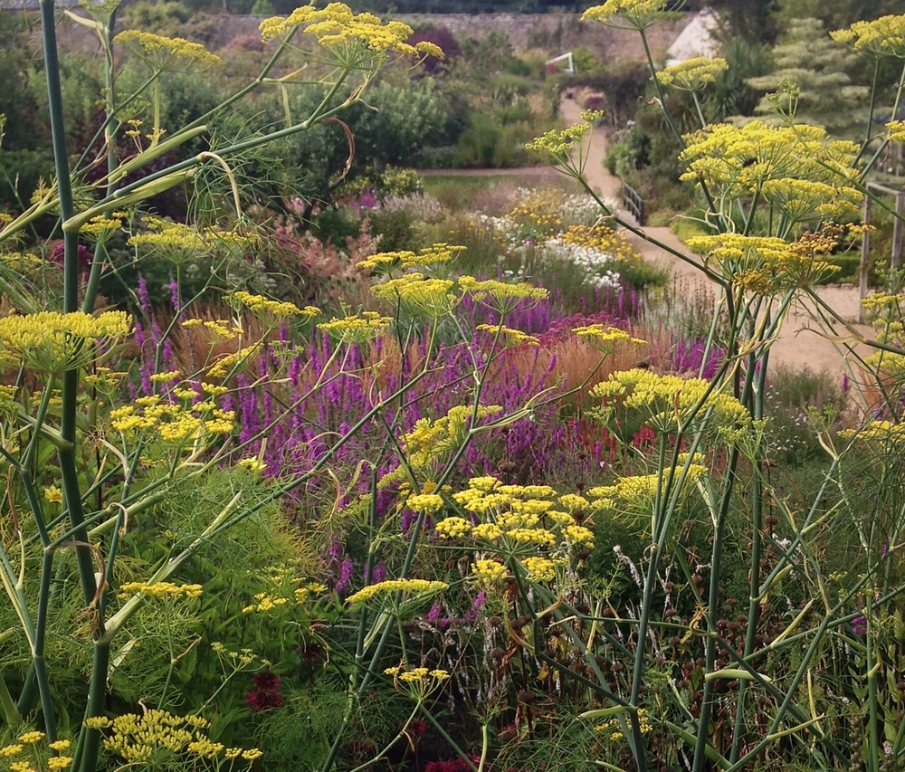 The long walk to the right. Victorian walled garden planted in drifts of colour.