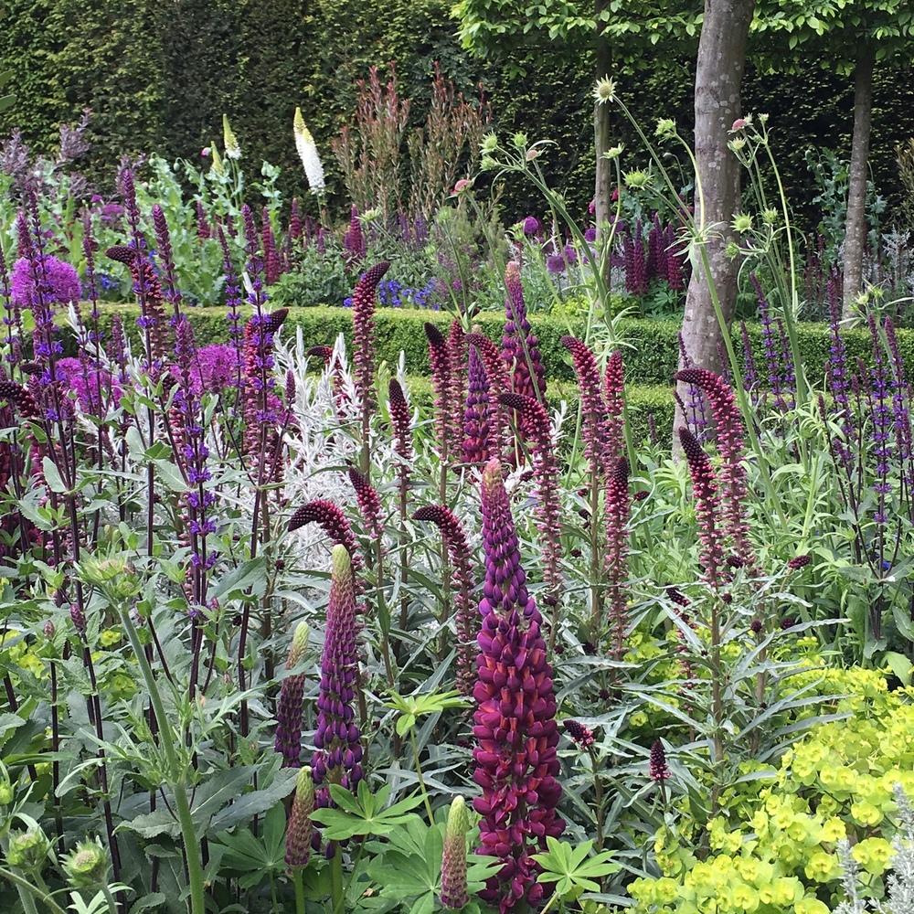 Lupins and Lysimachia in Charlie Albone's Husqvarna garden