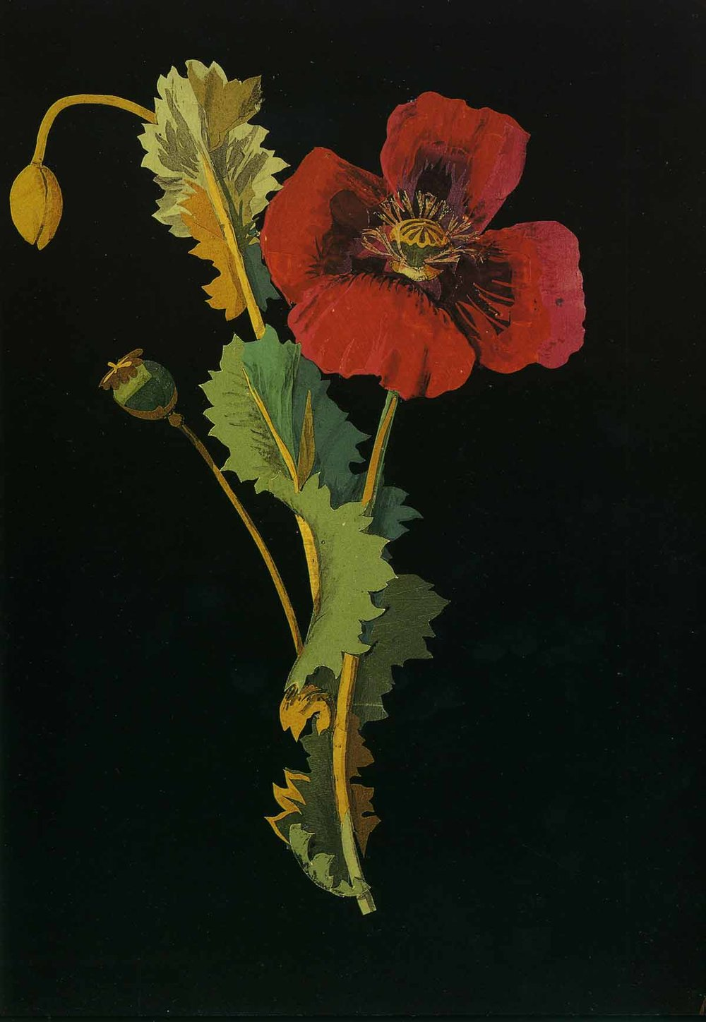 Papaver somniferum, the Opium Poppy, Bulstrode, October 18, 1776, by Mary Delany.Please note: All images are from The Paper Garden and provided courtesy of The British Museum.