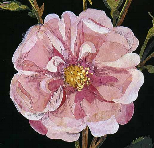 'The Paper Garden is unlike anything else you have ever read. At once a biography of an extraordinary 18th century gentlewoman and a meditation on late-life creativity, it is a beautifully written tour de force...' Detail of  Rosa gallica , Cluster Damask Rose, Bulstrode, July 1780.