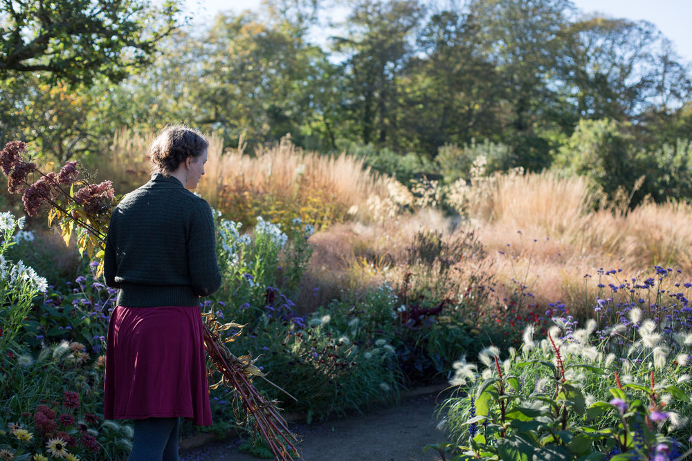 Anna Svensson, '18 collecting Eupatorium from the walled garden