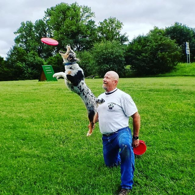 Congratulations to the President of our Arkansas branch of OKC DISC DOGS Lee Fairchild and his dog JC for placing 3rd at the @skyhoundz World Championship in the Micro Dog Open Division this Sunday in beautiful Chatanooga, Tennessee. Here's a shot of them at one of their last practices before the Championship getting a nearly dropless round, and then one of them on the winners podium JC eyeing the top prize after having comeback in the 3rd round with a dropless routine. Congratulations to all competitors.