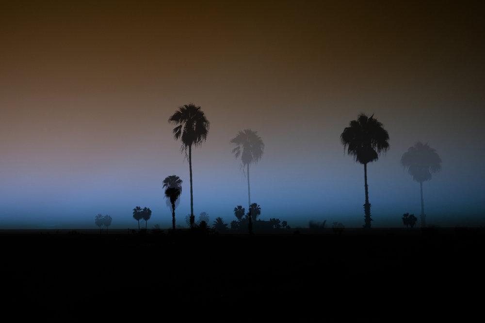 palmastropicas.jpg