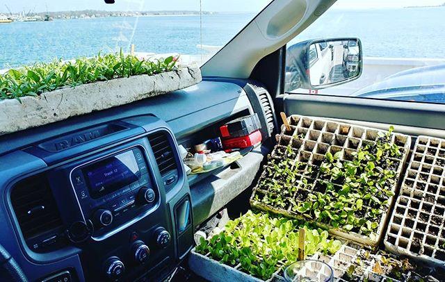 Plants on a ferry ride #plantingallday