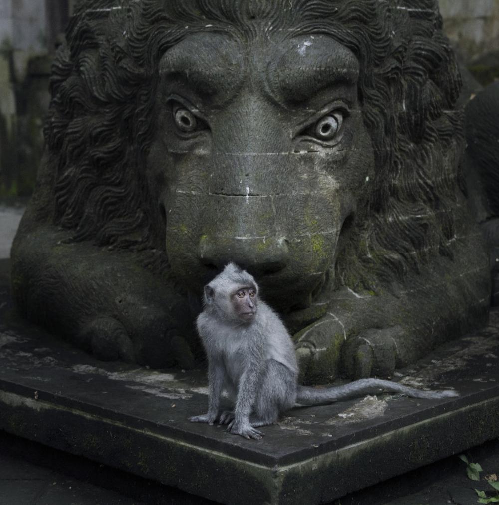 02_Monkey.jpg