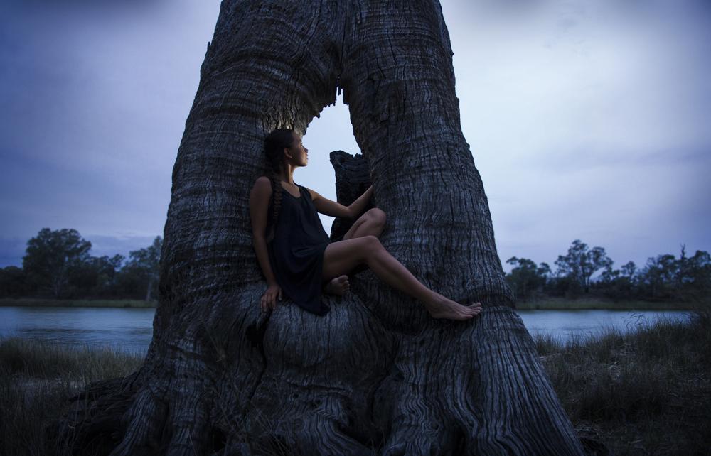 Clarissa_tree_01.jpg