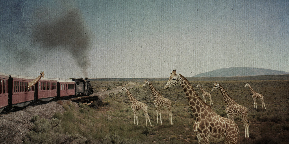 GiraffeTransport.jpg