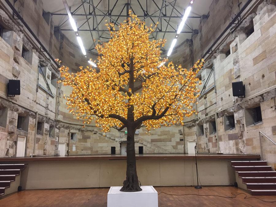 05-4.5m-Maple-Tree.jpg