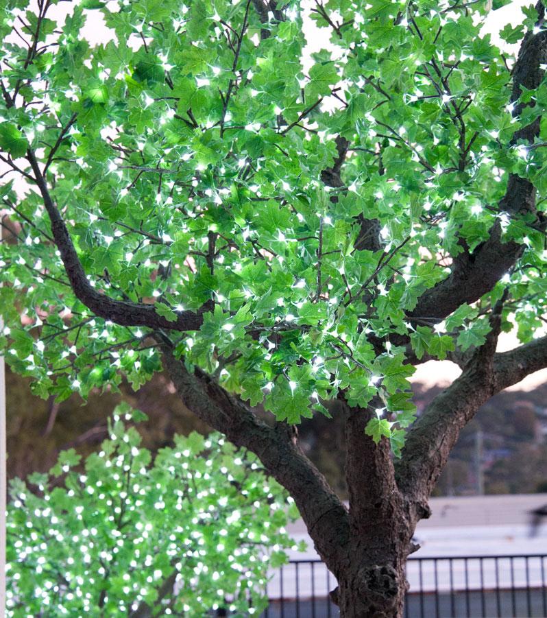 04-Maple-Green-Leaf.jpg