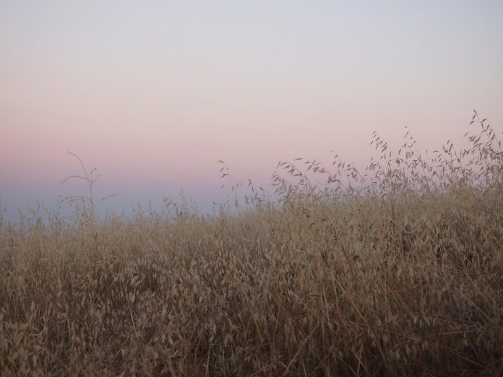 L.A. Parks / Local Guides