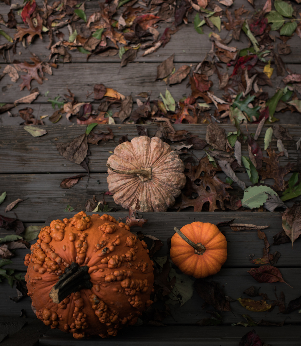 Asheville Folk: A Grown-up Halloween by Chelsea Lane. Buy a warty pumpkin. Doesn ' t even need carved. Nuff said.