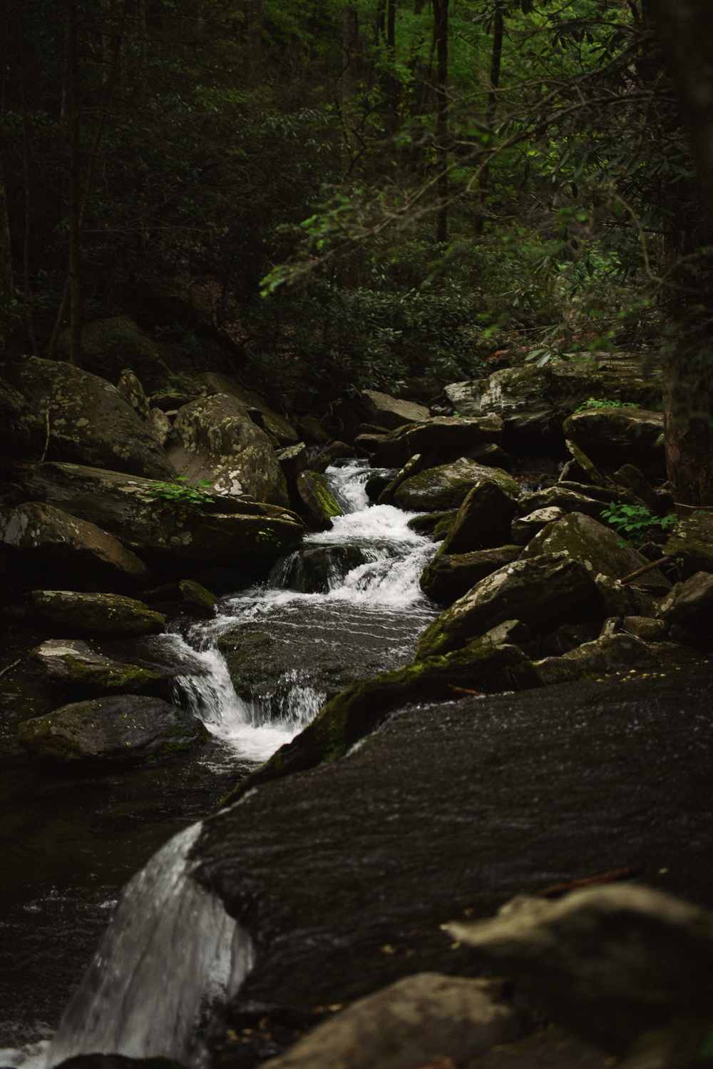 Asheville Folk. Waterfalls and Picnics by Chelsea Lane. A hike to Catawba Falls. Winding through the thin towering trees, you follow the water as it creates small falls and rushes over river rocks.