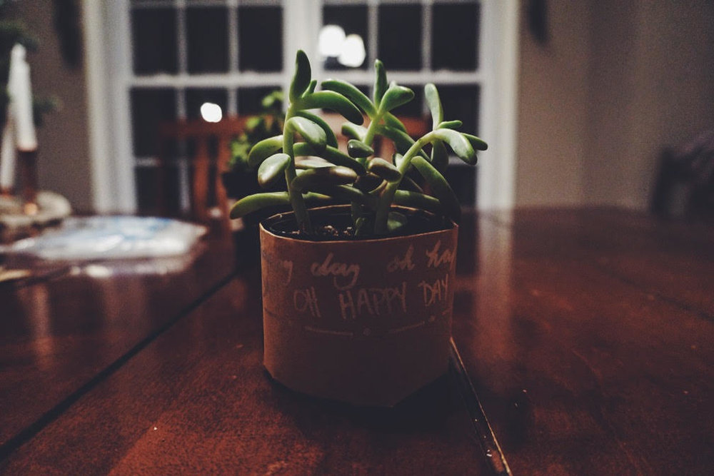 Place your choice succulent in your new brown paper pot and TA DA! Planting on a Budget by Carissa Borntreger