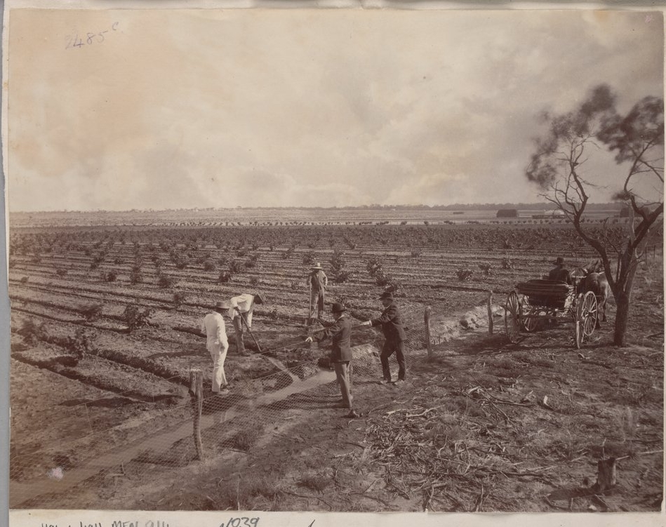 "J.W. Lindt, ""Irrigation at Mornington plantation"", Mildura, 1890.  H96.160/1915, State Library Victoria, Australia ."