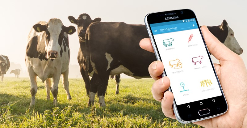FarmWizard App in action on a dairy farm