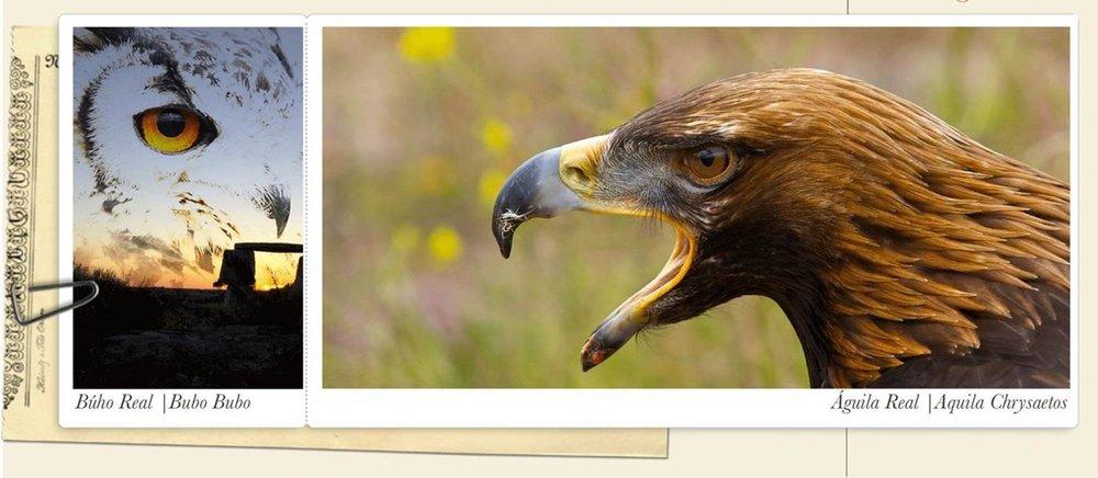 aves3.jpg