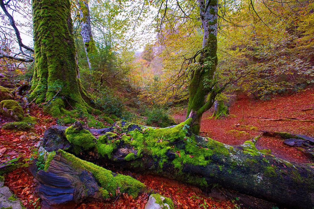 Selva de Irati, Navarra. Shutterstock.jpg