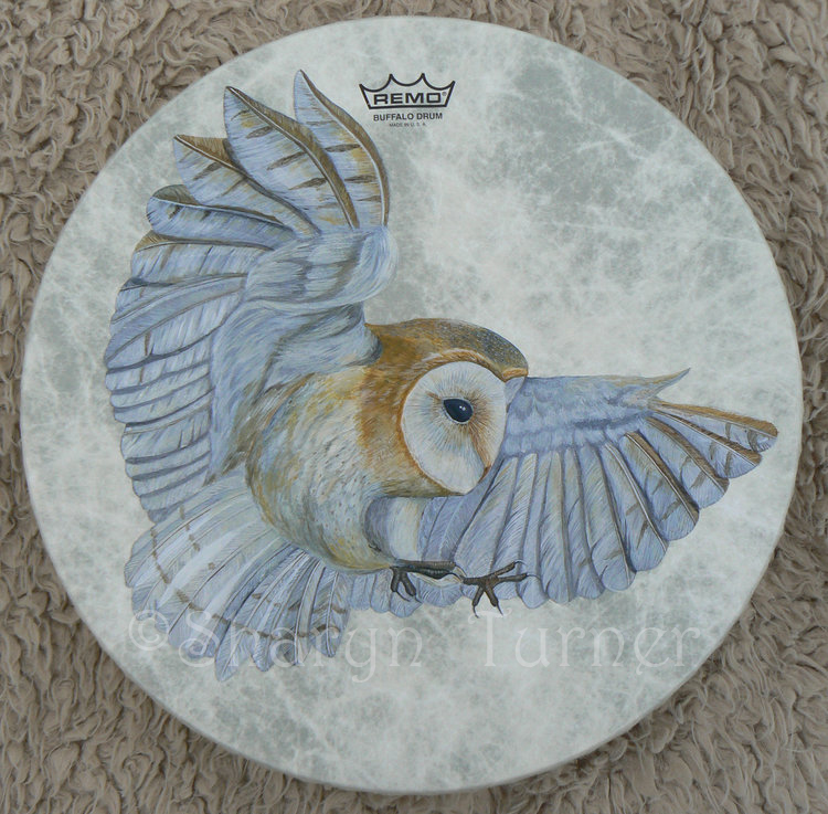 Barn Owl Drum