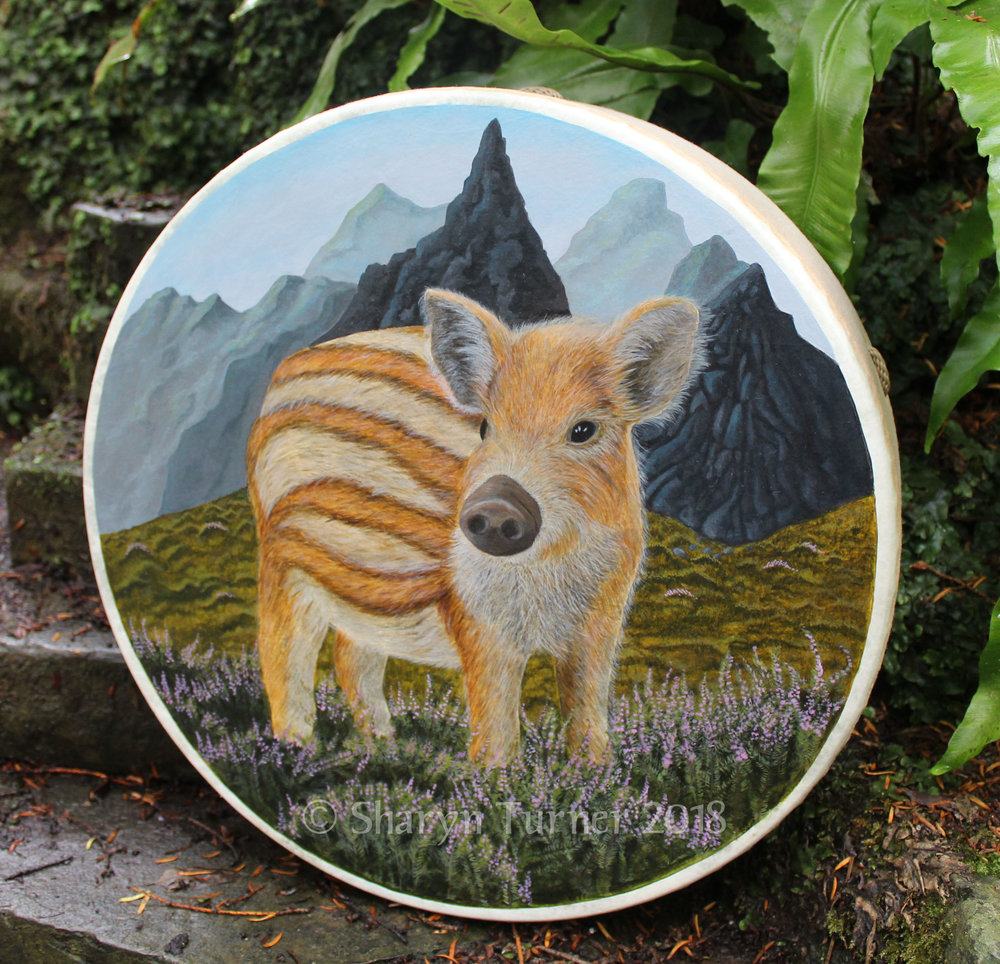 Wild Boar Piglet Drum - Acrylic on Fibreskyn © Sharyn Turner 2018