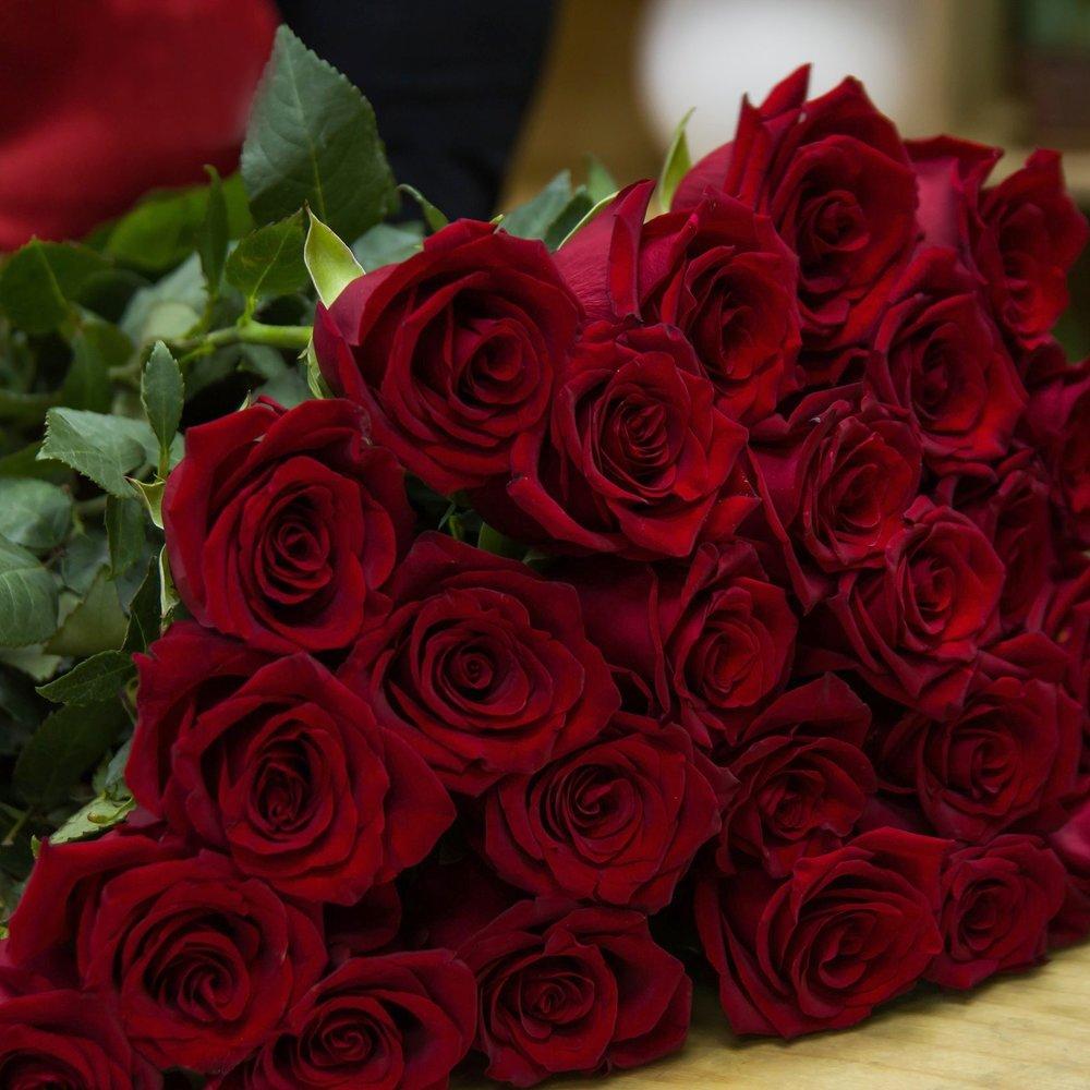 rose-3090834.jpg