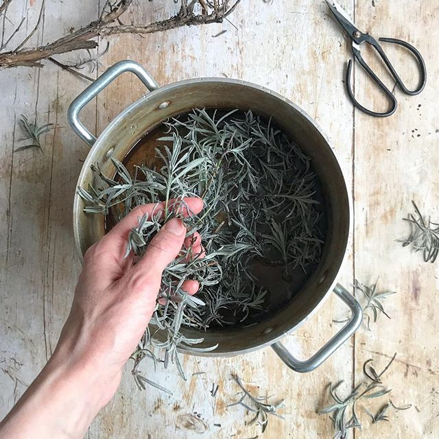 I've just put this lavender in my dye pot and started heating it gently... The delicious scent is already filling the air. . I brought this lavender home over the weekend... A man was pruning the huge lavender bush in his front garden, just around the corner from where I live. I asked if I could have some of the branches and he gladly gave them to me 🌱 . The last few times I've dyed with lavender I've made greys and browns. I wonder what colour this lot will make ✨ I think I'll dye some fabric for the quilt I'm slowly making. . Have you dyed with lavender before? What colour did you make?