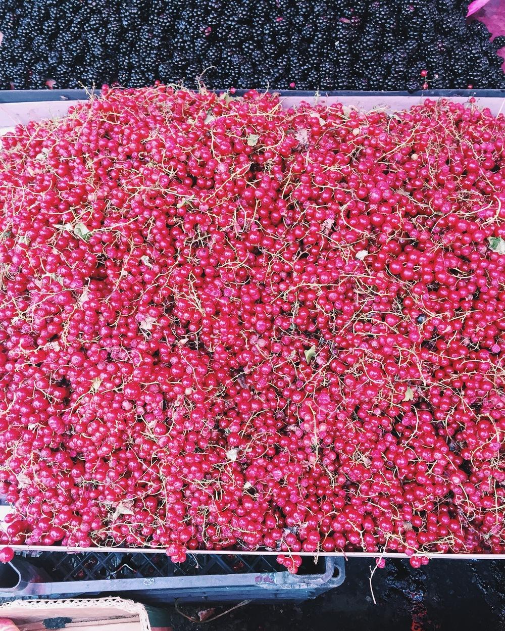 Mark Rothko: Berry Edition