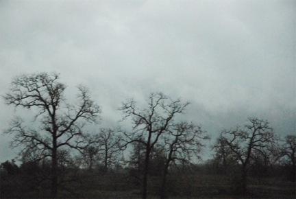 texas trees 31inx46in.jpeg
