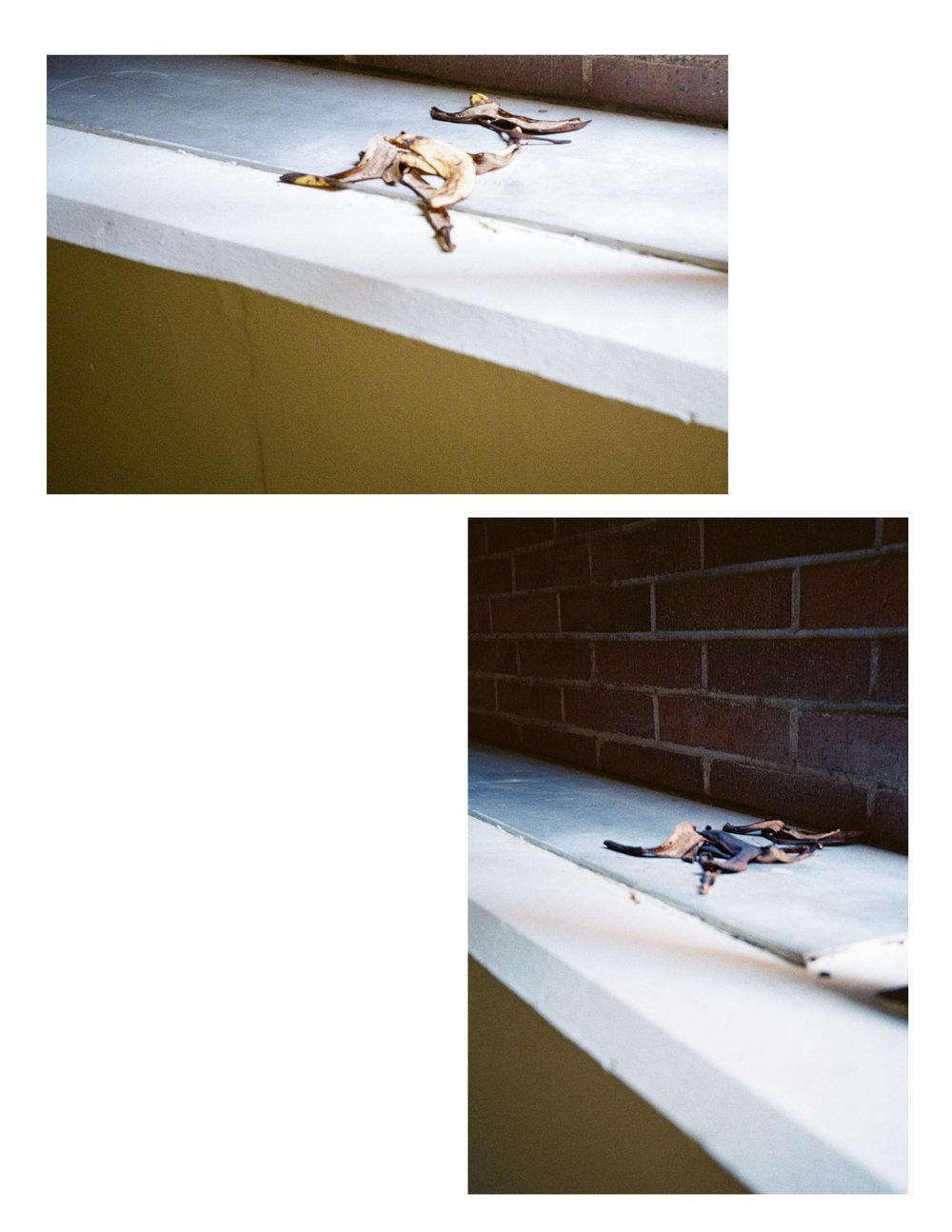 Decaying Bananas (no border).jpg