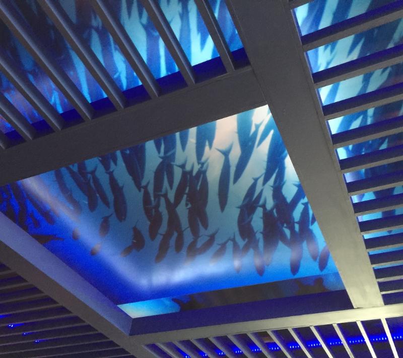 designers-ceiling