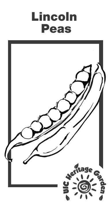 Lincoln Peas Illustration