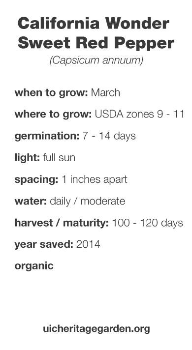 California Wonder Sweet Red Pepper growing information