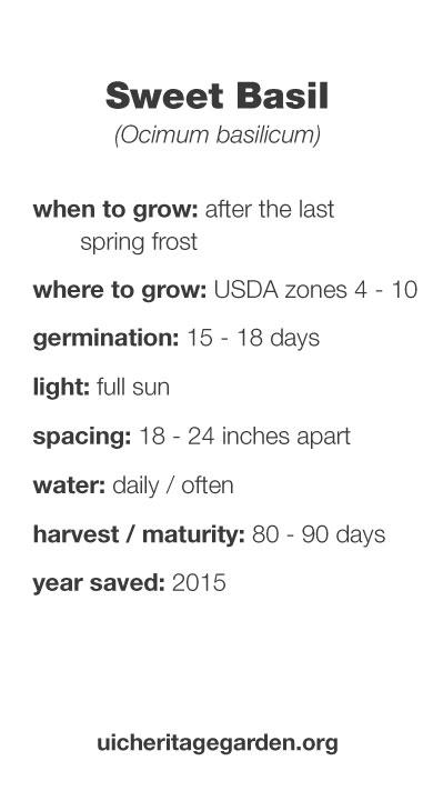 Sweet Basil growing information