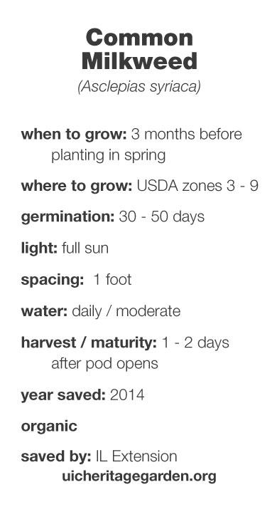 Common Milkweed growing information
