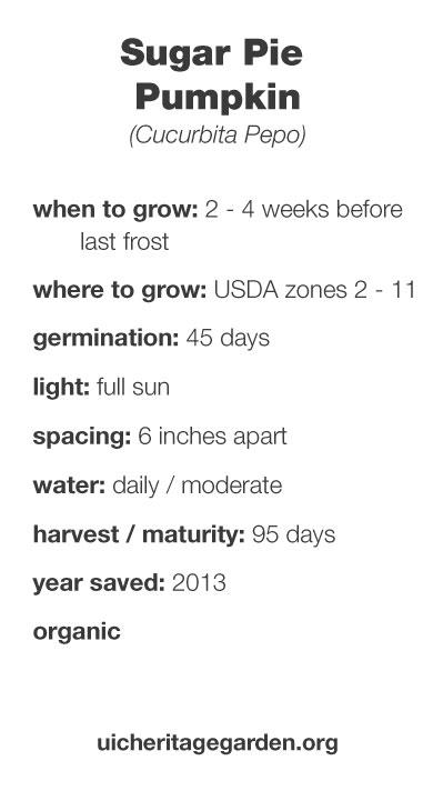 Sugar Pie Pumpkin growing information