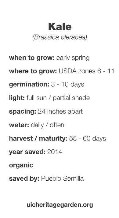 Kale growing information