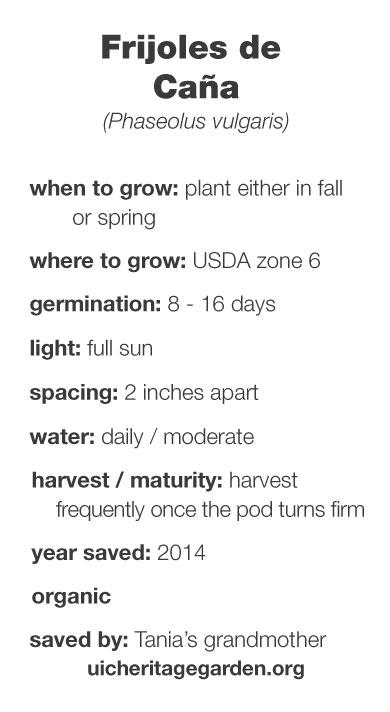Frijoles de Caña growing information