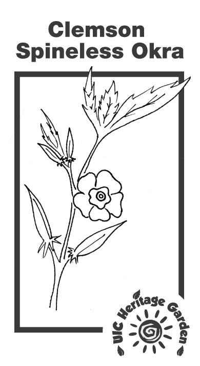 Clemson Spineless Okra Illustration
