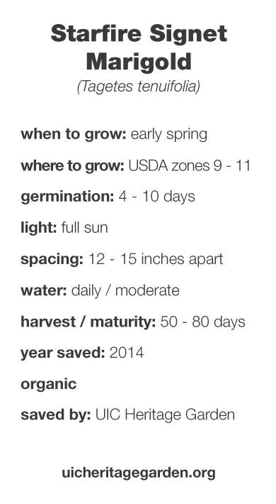 Starfire Signet Marigold growing information