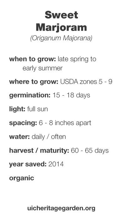 Sweet Marjoram growing information