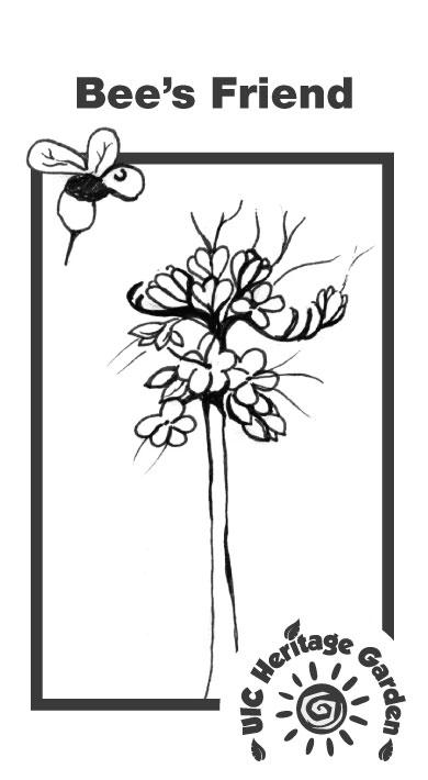 Bee's Friend Illustration