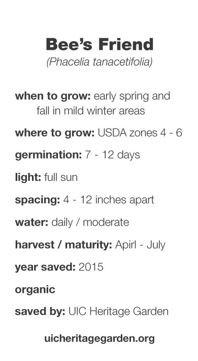 Bee's Friend growing information