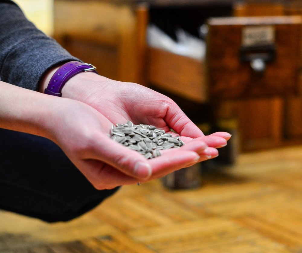Seed Viability Fact Sheet
