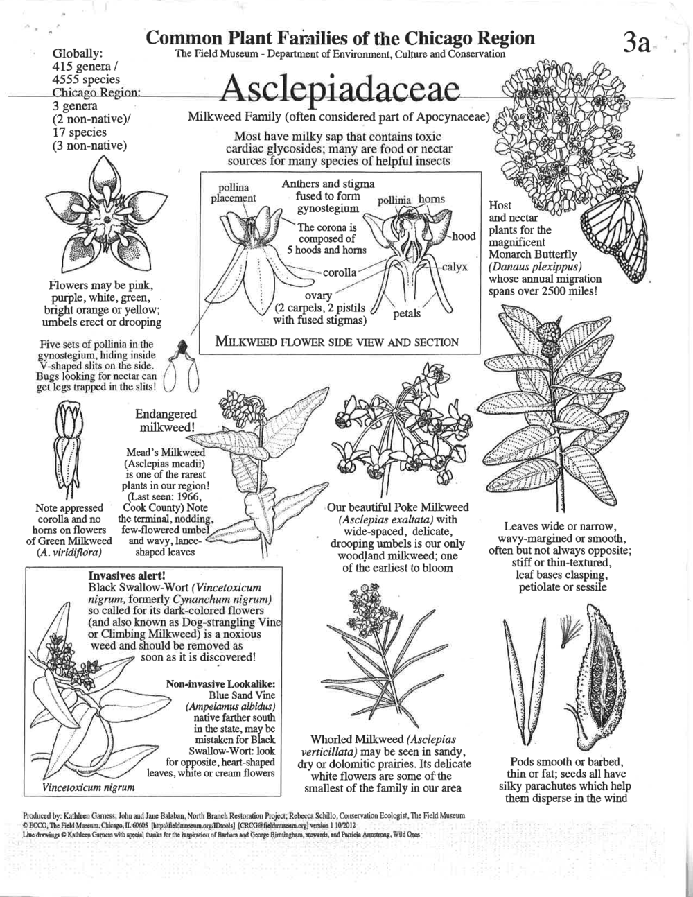 Poster of Common Plant Families of the Chicago Region