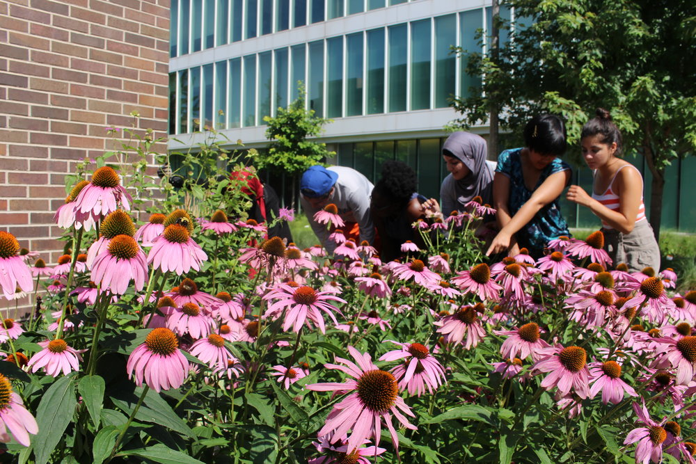 Heritage Gardeners looking at the cone flowers
